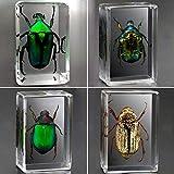ASDZ Espécimen de Resina de Insectos,Hermosa Resina Artesanía Colección De Ámbar Decoración del Hogar Juego Insectos Reales Resina Arácnido Espécimen Stem Set,Insectos Reales Mariposa Resina