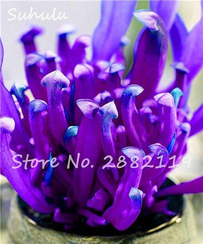 60 Pcs vivaces Nepenthes Seeds Carnivores Venus Fly Trap plus chaud du monde des plantes Graines Bonsai Garden Seed Color Mix Livraison gratuite 14