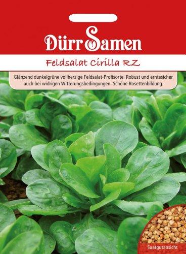 Feldsalat Cirilla RZ