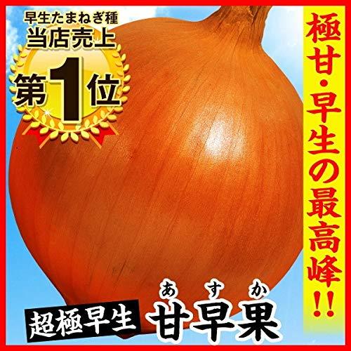 【メール便配送】国華園 種 野菜たね タマネギ ...