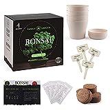 Faderr Bonsai Árbol para principiantes, maceta para cultivar, germinación de jardinería, kit de árbol de bonsai con 4 tipos Se-eds, manualidades, regalos, plantas de cultivo