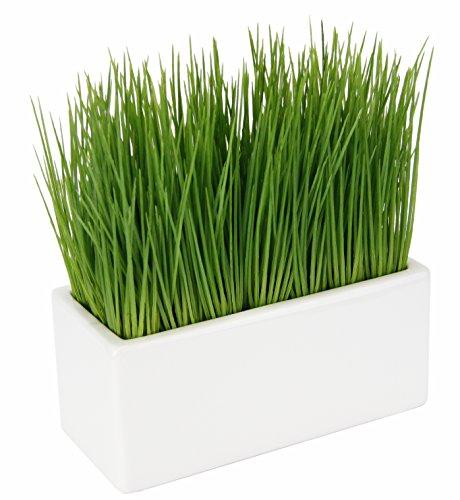 Flair Flower Gras in Keramik-Schale, Kunststoff, grün, 9x20x23 cm