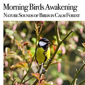 Morning Birds Awakening : Nature Sound of Birds in Calm Forest