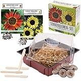 Set de cultivo de girasoles - juego de plantación de mini-invernadero, semillas y tierra - idea de regalo (Eclipse + Amarillo lima)