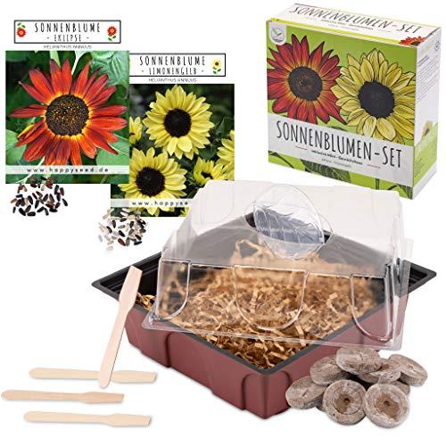 Sonnenblumen Anzuchtset - Pflanzset aus Mini-Gewächshaus, Sonnenblumen Samen & Erde - nachhaltige Geschenkidee für Pflanzenfreunde (Eklipse + Limonengelb)