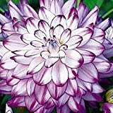 50 pz dalia semi di fiore di bellezza facile da coltivare il giardino domestico di fiori freschi ka Quantità confezione contiene 1 set In realtà spedire a tutti counries Tipo di prodotto: semi Immagine fornita è per only. Product scopo di riferime...