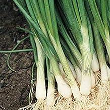 50 Semillas Frescas - Blanco Bunching Cebollas-El más