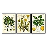 Poster botánico Vintage e Impresiones Plantas medicinales Cuadro Retro Arte de la Pared Cocina Medicina Herbaria Pintura en Lienzo Decoracion de Oficina 40x50cmx3 Sin Marco