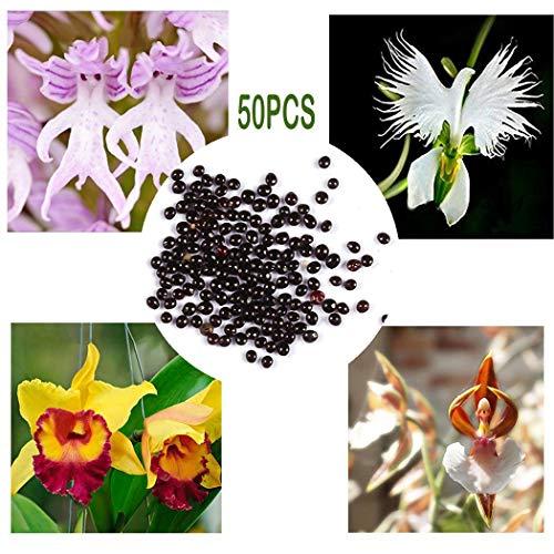 begorey Garten - Pyramide AFFE Orchidee Samen Blumensamen Outdoor Pflanzen Samen Bonsai Samen Blumensamen
