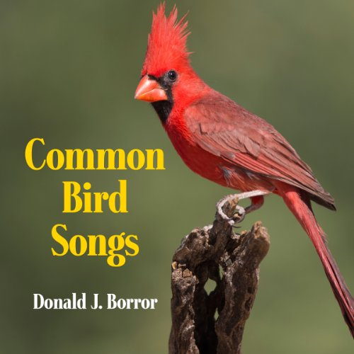 Common Bird Songs audiobook cover art