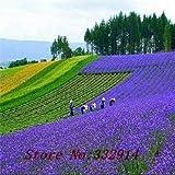 multicolore: saldi!100 semi di fiori colorati salvia.bello e facile da coltivare.spedizione gratuita