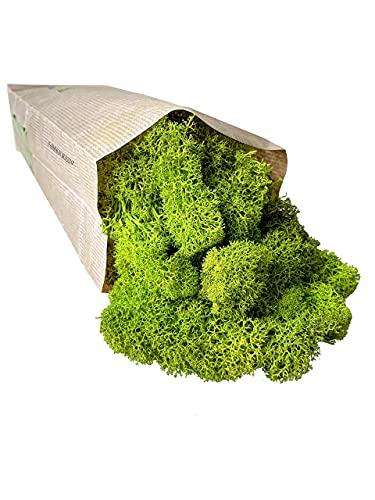 Lichene Stabilizzato Naturale 50gr Qualità Premium Colore Lime Green Verde Stabilizzato Muschio Stabilizzato Colorato Ideale Per Giardino Verticale Quadri Vegetali Modellismo Quadro Terrario Presepe