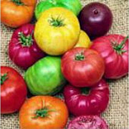 Beefsteak Rainbow Mix Tomato NEW 50 S.eeds Cheap super special price -