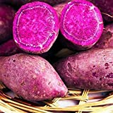 TOYHEART 100 Piezas De Semillas De Hortalizas De Primera Calidad, Semillas De Camote, Deliciosas Semillas De Hortalizas Púrpuras Naturales Deliciosas Para Invernadero Púrpura