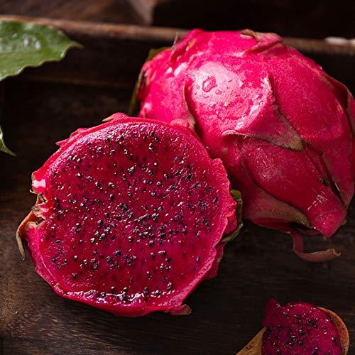 Granos de frutas1 Sac Pitaya Semilla Rústica Suculenta 3 Colores Semilla de Planta Estética para Patio - Semillas Pitaya Roja