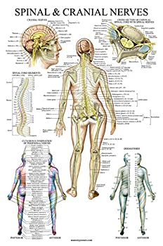 Best anatomy of nerves Reviews