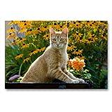 CALVENDO Premium Textil-Leinwand 90 x 60 cm Quer-Format Neugierige rot getigerter Katze in einem blühenden Garten, Leinwanddruck von Katho Menden
