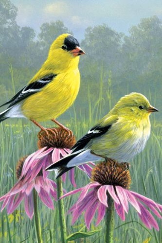 Tree-Free Greetings Noteables Notecards In Reusable Embossed Tin, 12 Card Assortment, Recycled, 4 x 6 Inches, Goldfinch and Coneflowers, Multi Color (76027) Photo #3