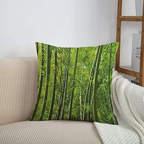 Fundas de cojines sencillas y clásicas de 45 x 45 cm,Conjunto de bambú, exótico bosque tropical de bambú con co,ideales para casa, oficina o para la espalda en el coche - Fundas de Poliéster para sofá