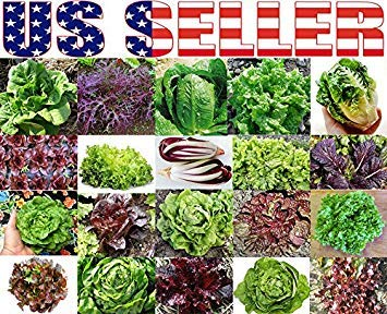 Potseed Keimfutter: 1500+ Seeds - Salat Mix: 300+ Biologisch angebaute Salat Mix 20 Sorten Erbstück Non-GMO Rare für Salat