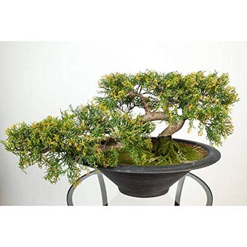 artplants.de Künstlicher Bonsai Zeder in Schale, 156 Spitzen, 40cm, wetterfest - hochwertiger Kunstbonsai Deko Bonsai