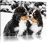 Chien doux Bouvier bernois dans la neige noir / blanc Taille: 80x60 sur toile, énorme XXL Photos complètement encadrée avec...