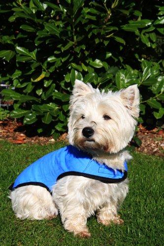 Prestige Cool Coat - Abrigo para Perros, Talla S, Color Azul