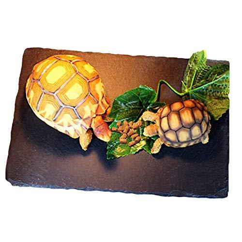 Tfwadmx Reptile Basking Rock Platform, Tortoise Feeding Plate Bowl, Reptile Food Dish Grinding Nail Landscape Habitat Decor for Lizard Bearded Dragon Turtle Crested Gecko Snake