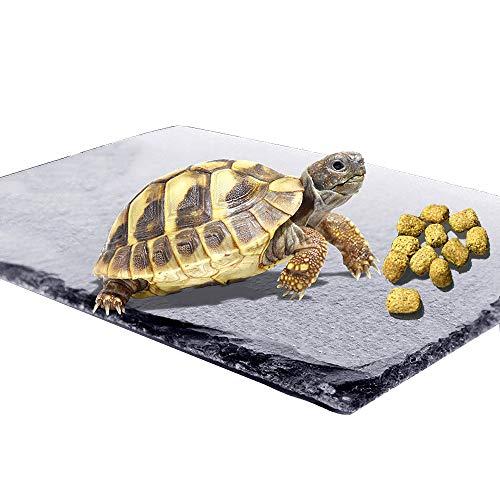 Reptile Basking Platform Tortoise Rock Plate Turtle Bathing Area Feeding Food Dish Resting Terrace