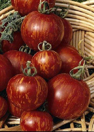Tropica - Tomaten - Tigerella (Lycopersicon esculentum) - 10 Samen - Historische Tomatensorte