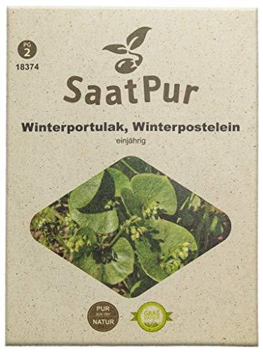 SaatPur Winterportulak Samen, Saatgut für ca. 1500 Pflanzen