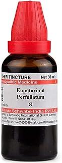 Willmar Schwabe Homeopathy Eupatorium Perfoliatum Mother Tincture Q (30 ML) by Qualityexport