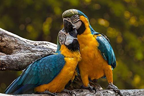 HQHff Pappagallo Esotico Allah Animale Uccello Amore Coppia,Puzzle di Adulti 1000 Pezzi 75x50cm,Regalo di Puzzle in Legno 3D Decorazione della casa Fai