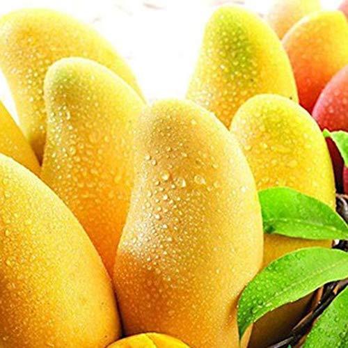 strimusimak Mangobaum Seltene Samen Köstliche Süße Saftige Obstpflanze Hausgarten Bauernhof Zierdekor - 10 STK 10 Stück