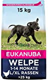 Eukanuba Puppy Large Breed Trockenfutter (für Welpen großer Hunderassen, Premiumnahrung mit Huhn), 15 kg Beutel