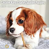 2021 Cavalier King Charles Spaniel Puppies Wall Calendar by Bright Day, 12 x 12 Inch, Cute Dog