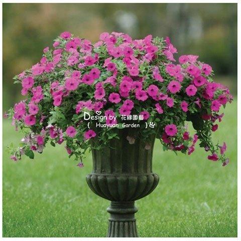 2016 Promotion Précipité Plantes d'intérieur de 20 différents Hanging Graines Petunia, Graines Blended-couleur Graines de plantes, jardin - 100