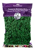 SuperMoss (21757) Reindeer Moss Preserved, Forest, 8oz (200 cubic inch)...