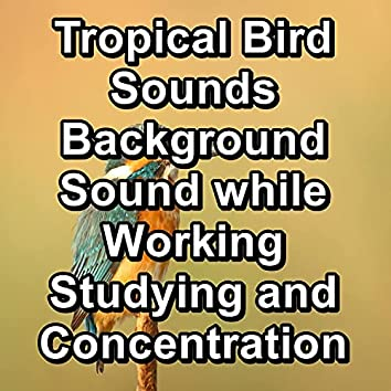 Tropical Bird Sounds Background Sound while Working Studying and Concentration