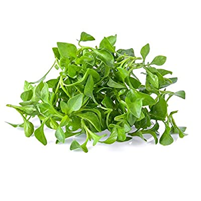 Curled Cress Seeds: Non-GMO Sprouting Seeds for Growing Microgreens, Gardening Baby Salad Greens, More