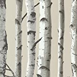 Brewster 2532-20418 Irvin Birch Tree Wallpaper, Grey