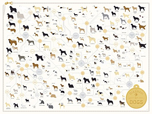 Vets and veterinary students will love this pet breeds poster