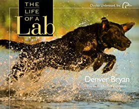 The Life of a Lab