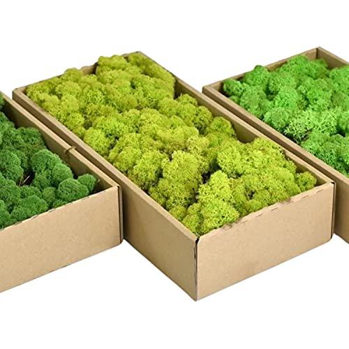 Islandmoos - Das original Islandmoos zum basteln und Dekorieren. Echtes Naturprodukt. Dekomoos, Moos zum basteln, Deko Moos natur konserviert (0.5 Kg, Limettengrün)