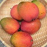沖縄県産フルーツ 濃厚完熟アップルマンゴー訳あり家庭用2kg