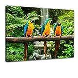 Bilderdepot24 Bild auf Leinwand | Blau-Gelber Papagei I in