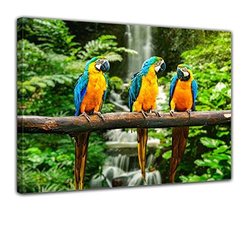 Wandbild - Blau-Gelber Papagei - Bild auf Leinwand - 40x30 cm - Leinwandbilder - Tierwelten - Südamerika - Ara - Gelbbrustara - tropisch