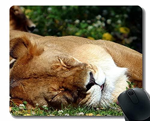Podkładka pod mysz z krawędzią blokującą, Lew Sleep Grass Big Cat Drapieżnik 52308 Mata myszy gier