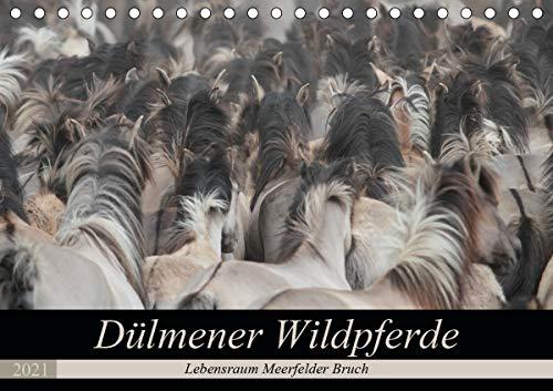 Dülmener Wildpferde - Lebensraum Meerfelder Bruch (Tischkalender 2021 DIN A5 quer)
