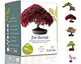 Cultivea Mini - 5 Bonsai Ready-to-Grow Kit - Semi di qualità - Giardino e decorazione - Idea regalo (Mela rossa, Cercis cinese, Ginepro, Liquidambar, Abete rosso) (Bonsai)